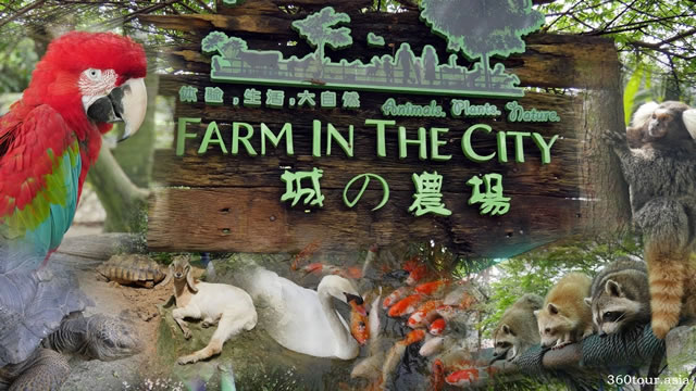 Farm In The City at Selangor – Most Number of Animal Species in a Petting Zoo