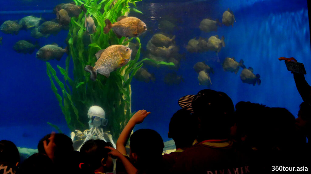 Get thrilled with the flesh eating Piranhas at Aquaria KLCC.