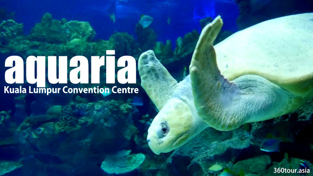Aquaria KLCC – Discover, Learn, Experience at state-of-the-art aquarium at Kuala Lumpur