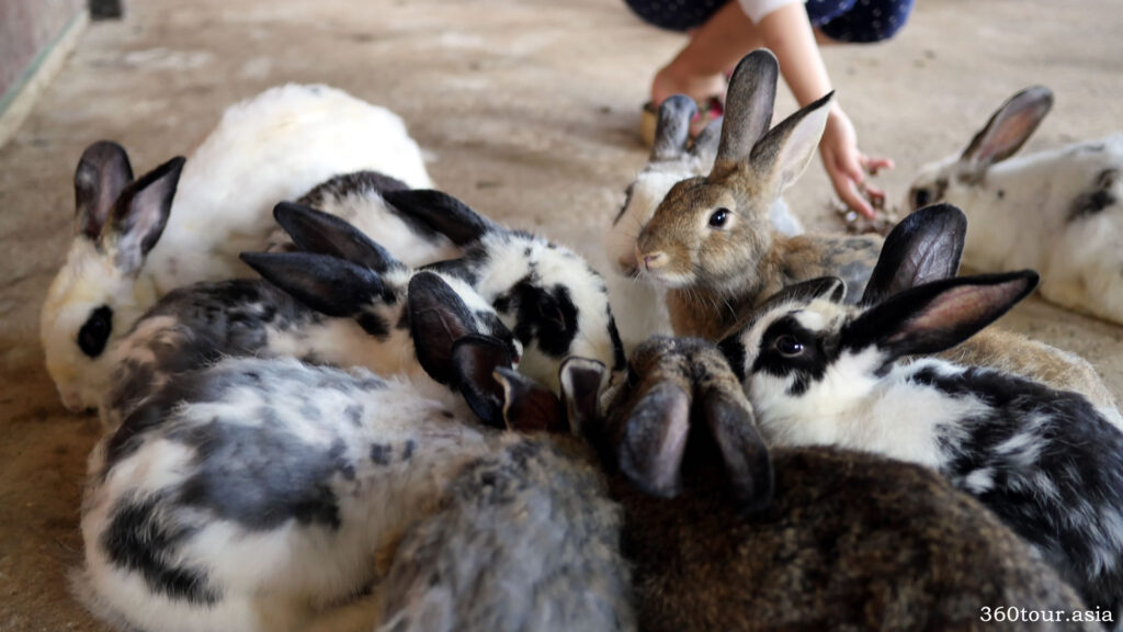 White, Black, Brown and Spotted rabbits in the pen