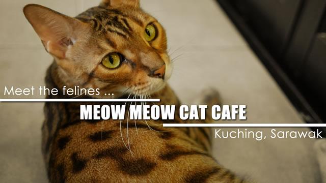 在猫城古晋的Meow Meow猫咖啡馆